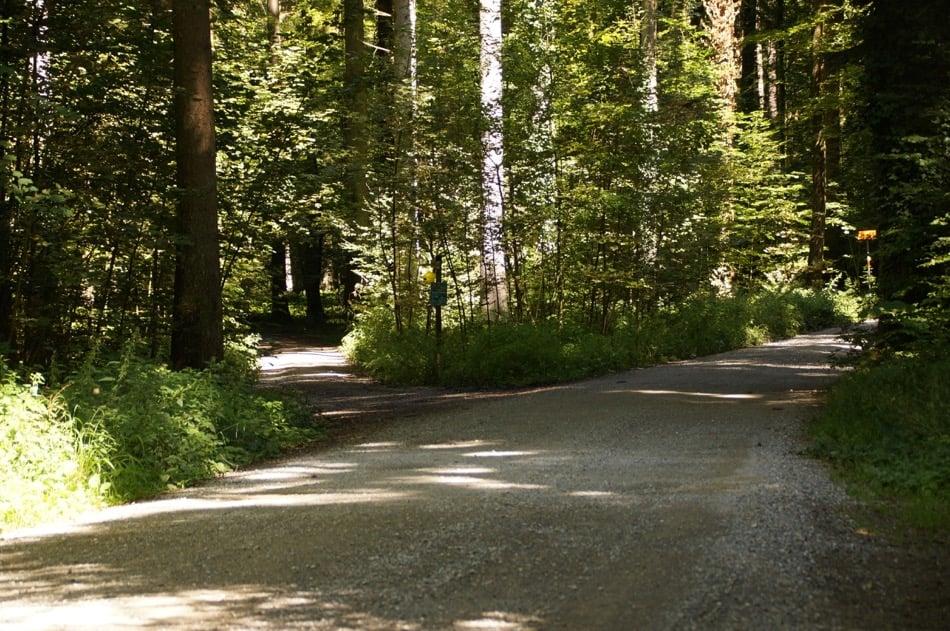 wunderschöner Waldweg zur Forsthütte