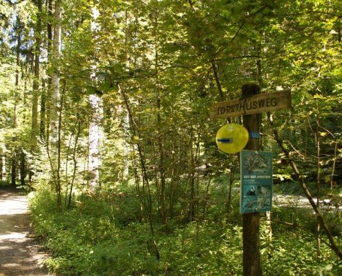 Auf dem Forsthusweg zur Waldhütte Volkestwil